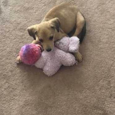 Baxter with his new toys.